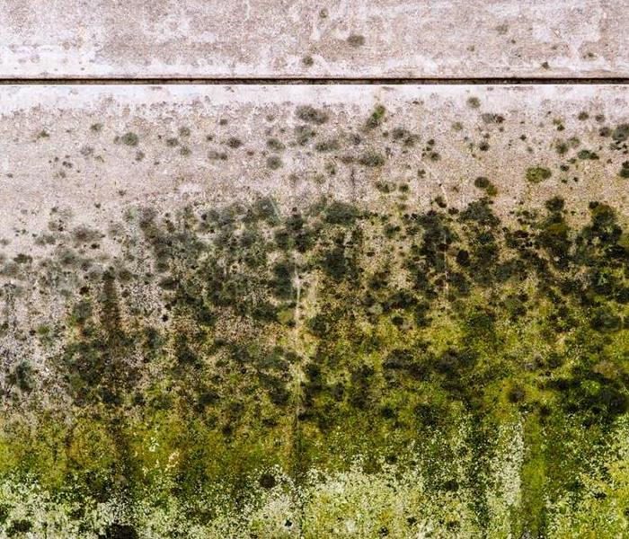 Mold Remediation Tips for Keeping Your Vacant Rental Property Mold-Free